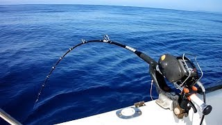 Take a private boat and do deep sea fishing
