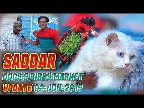 Sunday Saddar Dogs and Birds Market 2-6-2019 Cats birds for sale Jamshed Asmi Informative Channel