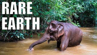 The Last Elephants of Cambodia