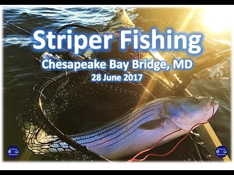 Striper And White Perch Fishing At Sandy Point State Park, Chesapeake Bay Bridge, 28 June 2017