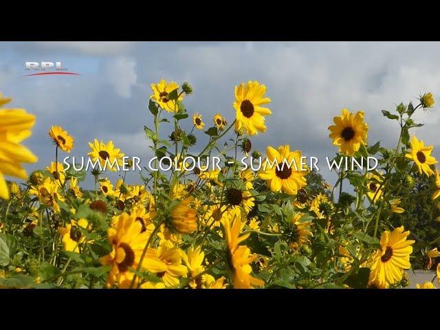 Summer colour, summer wind - Natuur in de omgeving - RPL TV Woerden - 15 oktober 2018