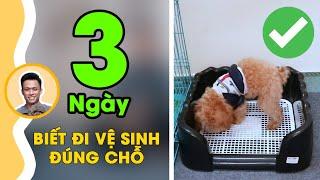Huấn luyện chó 01: Dạy cún đi vệ sİnh đúng chỗ trong 3 ngày