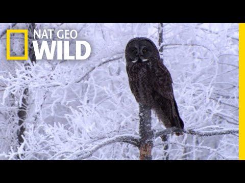 Happy Holidays From All the WILD Animals! | Nat Geo WILD