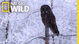 Happy Holidays From All the WILD Animals!  Nat Geo WILD