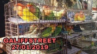 All birds price in kolkatas best birds and pets market galiffstreet 27.01.2019HD