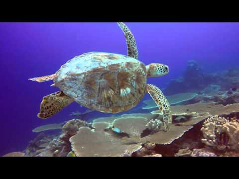 Cocos Keeling Islands - Scuba Diving & Snorkelling