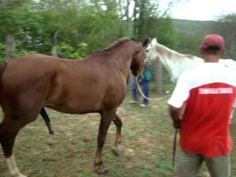 Fotos de cavalos cruzando com eguas 81