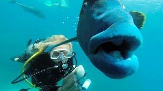 GIGANTIC FISH!