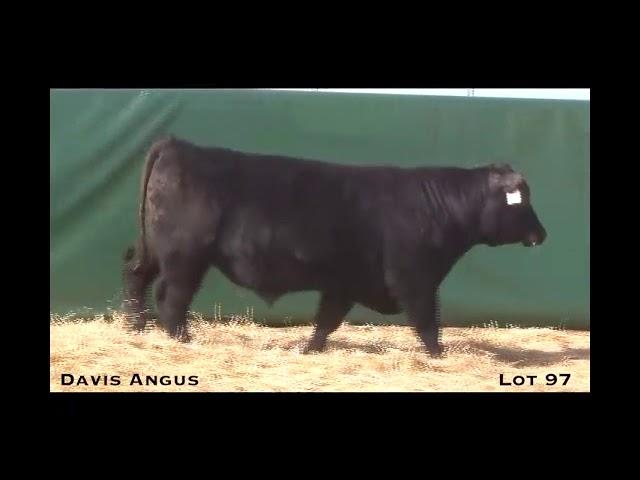 Davis Angus Lot 97
