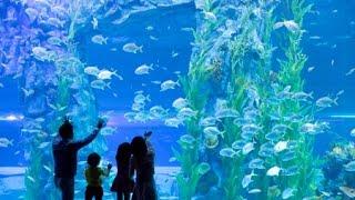 влог: Самый большой океанариум в Корее ♥ LOTTE AQUARIUM