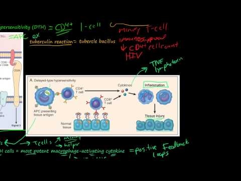 81P- Delayed-Type Hypersensitivity, T-Cell-Mediated (Type IV) Hypersensitivity
