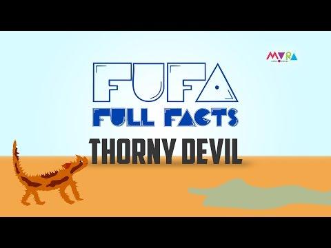 FUFA Full Facts Thorny Devil