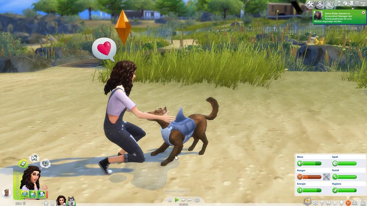 Wir Adoptieren Eine Streuner 03 Die Sims 4 Hunde Und Katzen Let S Play The Sims 4 Youtube