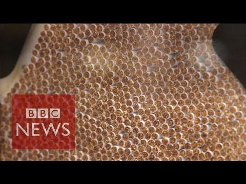 The Secret Bribes Of Big Tobacco - BBC News