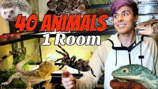 Animal Room Tour In My New House! | 40 Animals in 1 Room