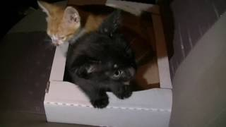лесные котята