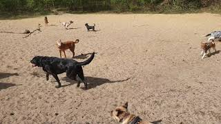 Hotdogs wandeling in Apeldoorn 24 april 2019