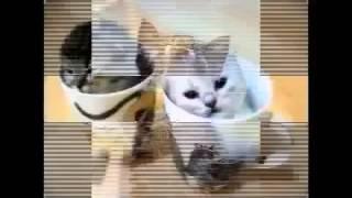 Приколы с животными  Слайдшоу 1