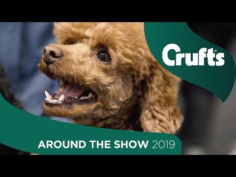 Around the Show on Day 4 | Crufts 2019