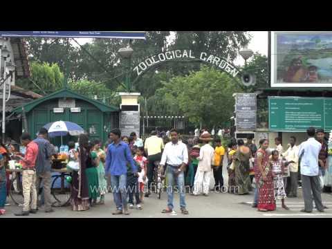 Sunday rush outside Kolkata zoo