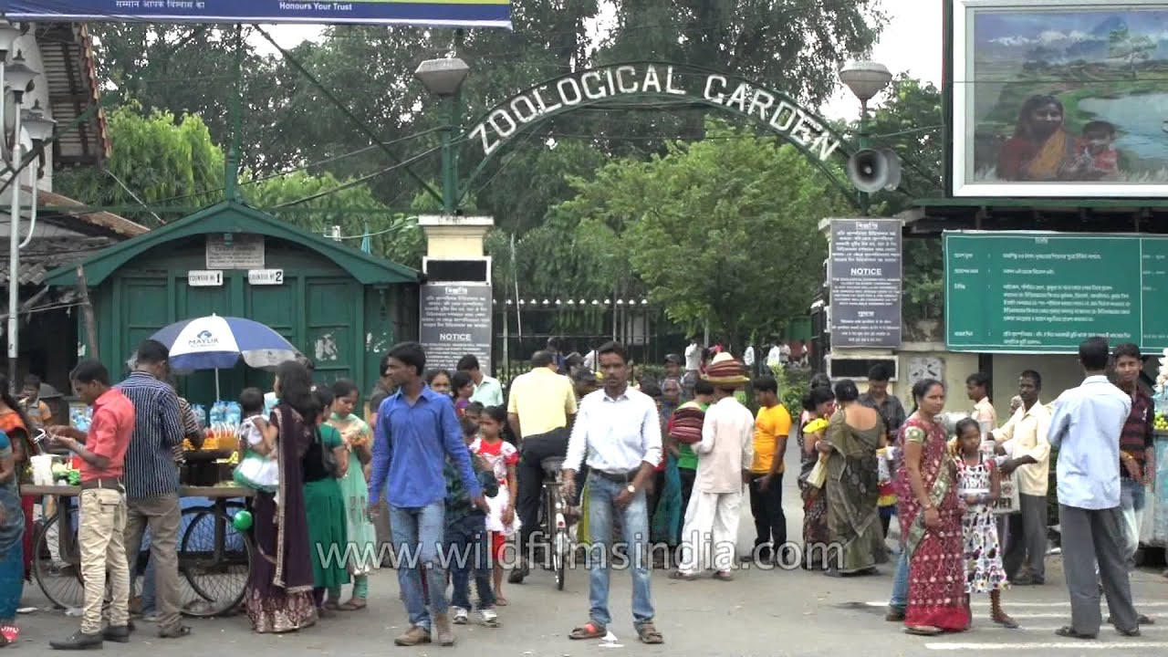a visit to the zoo kolkata s alipur zoo If you are planning to go to a natural place along with your family or friends, it can't get any better than going to alipore zoological garden, kolkatawith the mesmerizing nature and a wide variety of animals, it certainly will be the most rejuvenating as well as educative experience for you and your familythis kolkata zoo started way back in 1876 and is located close to the river ganga .