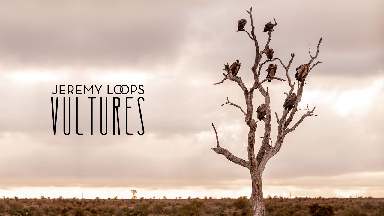 jeremy-loops-vultures-official-audio-jeremy-loops