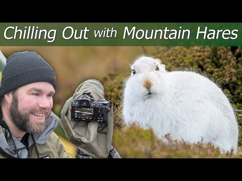 Chilling Out With Mountain Hares | Wildlife Photography & Wild Camping | Nikon Z7 + 500mm F/5.6E PF