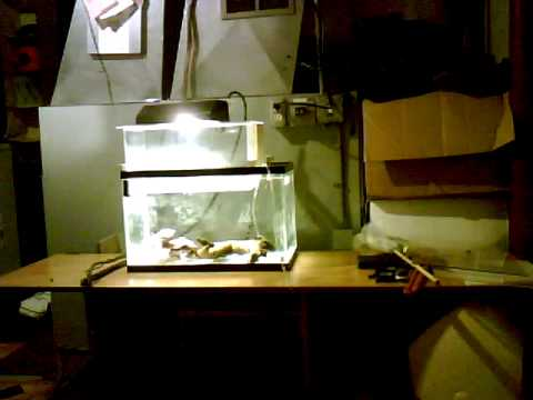 Custom acrylic diy aquarium all in one fish tank for 10 for Acrylic vs glass fish tank