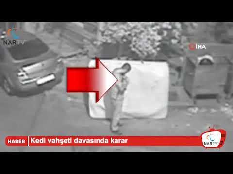 Kedi Öldüren Şahısa 2 Hapis Cezası Verildi