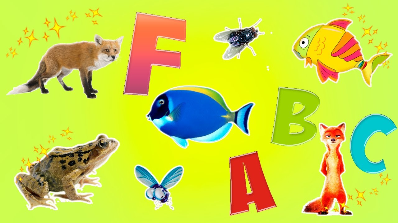 4 letter animals learn alphabet with animals for children letter 20099 | maxresdefault
