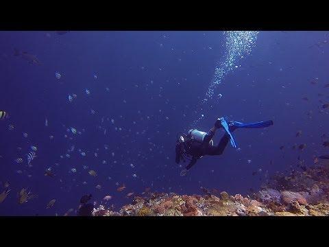 Diving around the Komodo Islands | April 2013 | by DAANLEKA