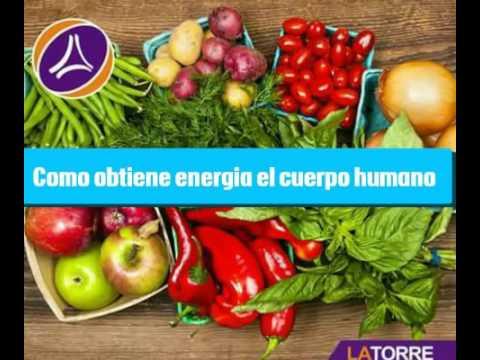 como obtiene energia el cuerpo humano proyecto de