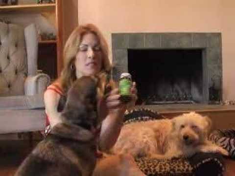 Natural Remedy For Dogs Heart Disease
