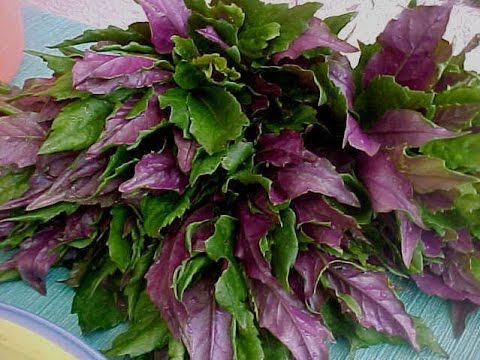 Image result for okinawa spinach