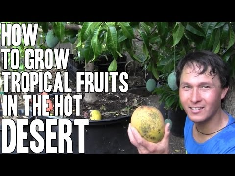 How to Grow Tropical Fruit Trees in a  Desert Garden