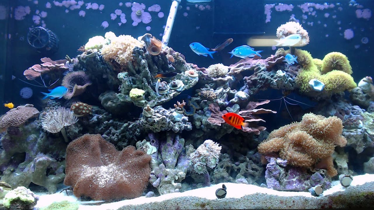 Aquarium Timer: Online Timer with Fish Tank Backgrounds