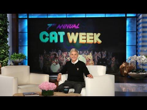 hqdefault it's ellen's 7th annual cat week! youtube