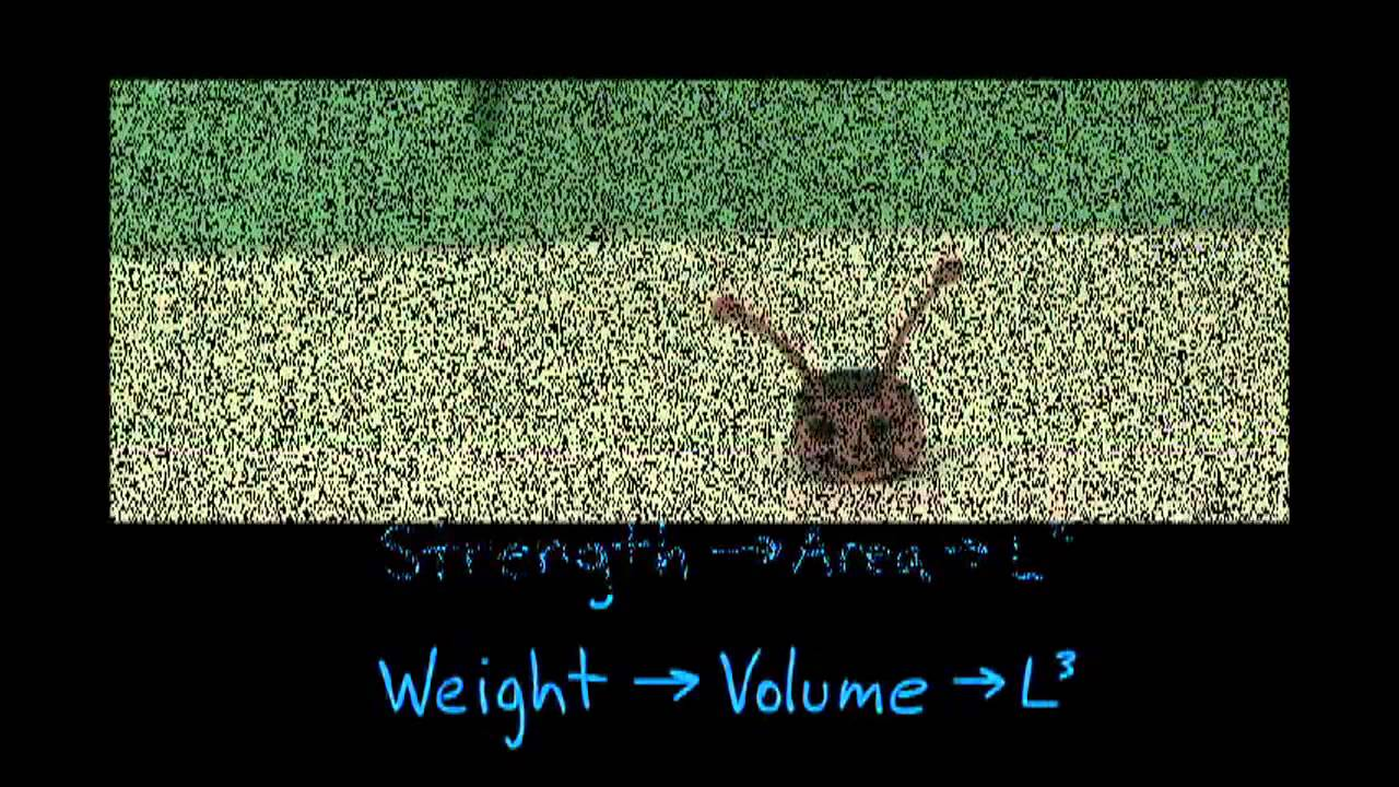 Small is mighty the square cube law - YouTube