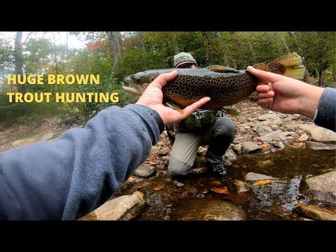 FlyFishing Western North Carolina For Big Browns!