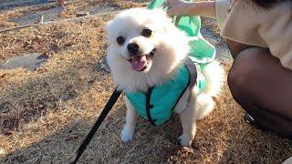 엄마 생신 선물로 댕댕이 마카롱 배달하는 강아지 | 폼…