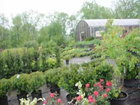 Plant Delightful Rose Bushes  Gardens Delights