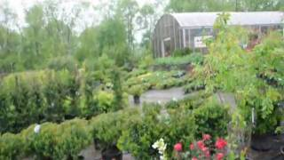 Plant Delightful Rose Bushes  Gardens Delights