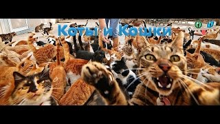 Коты и Кошки. Кис-кис-кис-киса, киса-кисуня. Новое 2017