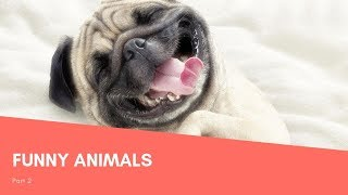 FUNNY ANIMALS | PART 2