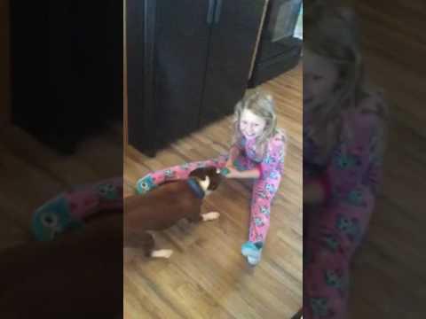 How my dog pulls me around