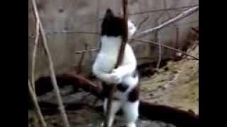 "кот который ""танцует стриптиз"" от валерьянки"