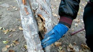 видео лечение деревьев