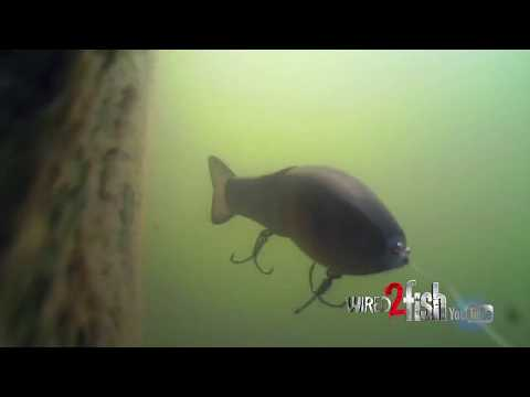 Watch BASS REACT to Different SWIMBAITS Fished Deep!