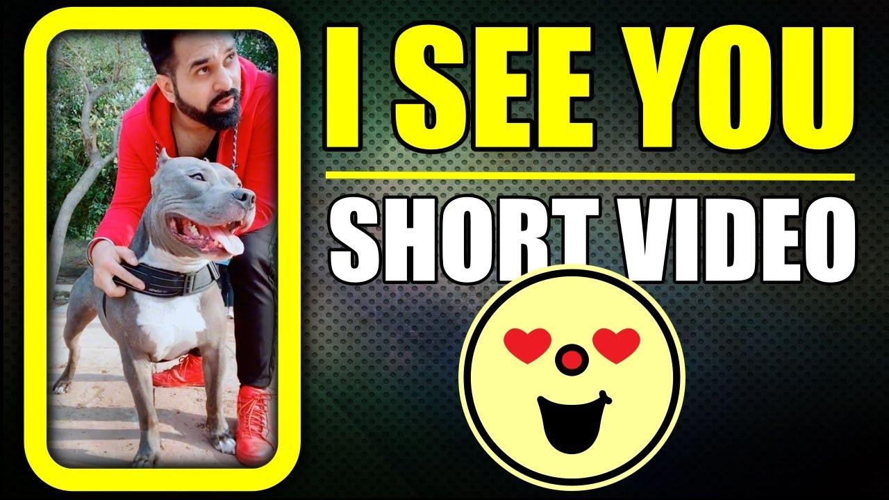 Brody my Tiger 🐯 Dog #shorts Video American bully | Harpreet SDC