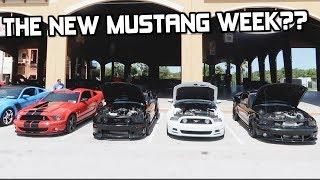 A New Mustang Week in Florida? Mustangs at Daytona Beach 2019 *Mustangs Everywhere!*